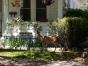Un faon dans un jardin à Yreka/A fawn in a yard in Yreka