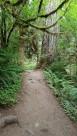 Sentier Holl of Mosses